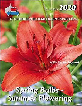 Spring Bulbs - Summer Flowering