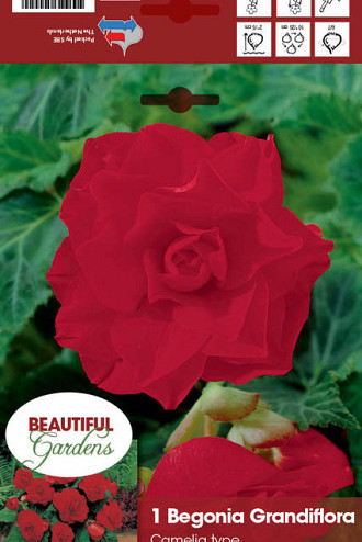 Double Camelia Red