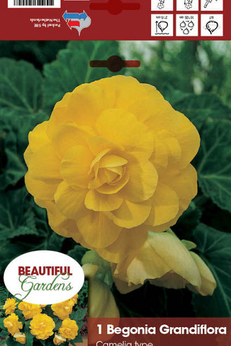 Double Camelia Yellow