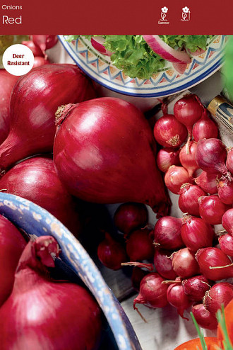 Onion Red 32 lbs