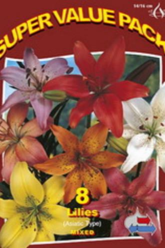 Lilium Asiatic Mix 20x6
