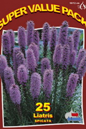 Liatris Spicata Blue 20x25