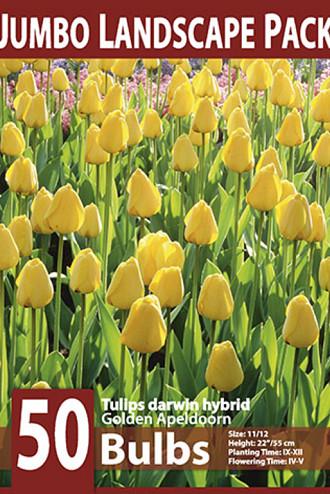 Golden Apeldoorn 10x50
